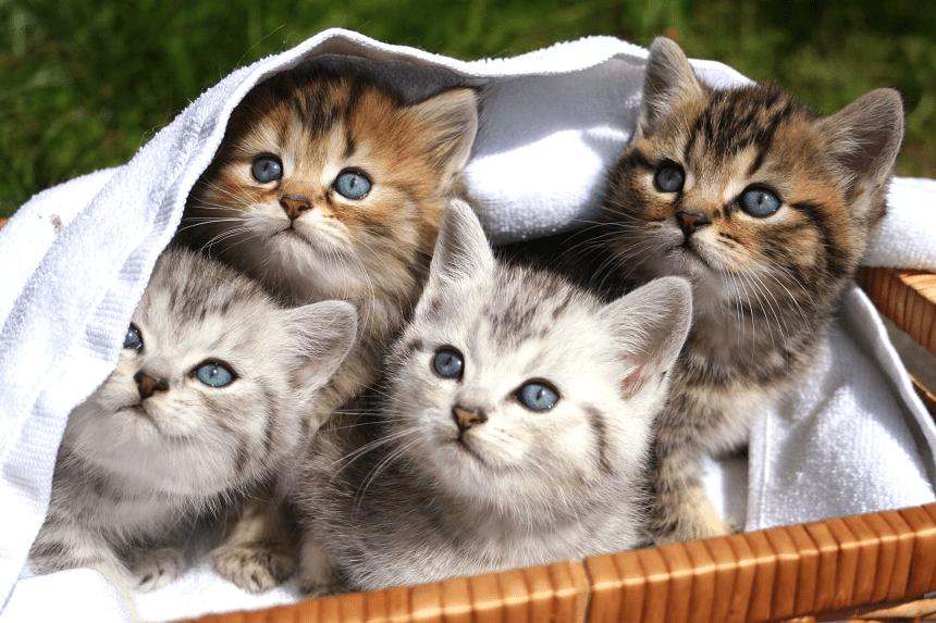 Jak Nazwać Kota Popularne Rzadkie I Nietypowe Kocie Imiona Blog
