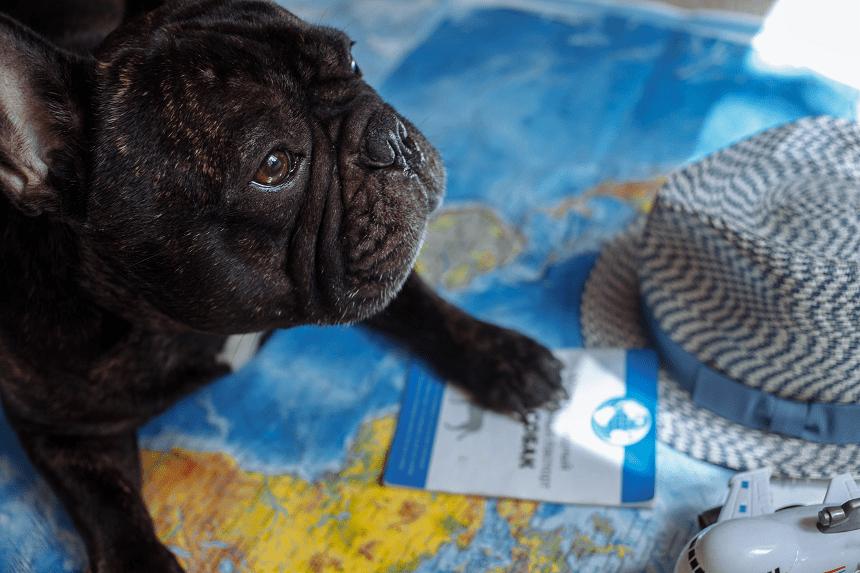 umawiać się z psem singapurski chrześcijański randki online