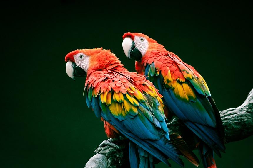 Ziarno dla ary – i co jeszcze, czyli co je papuga ara?