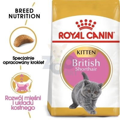 ROYAL CANIN British Shorthair Kitten 10kg + saszetka Kitten w galaretce 12x85g