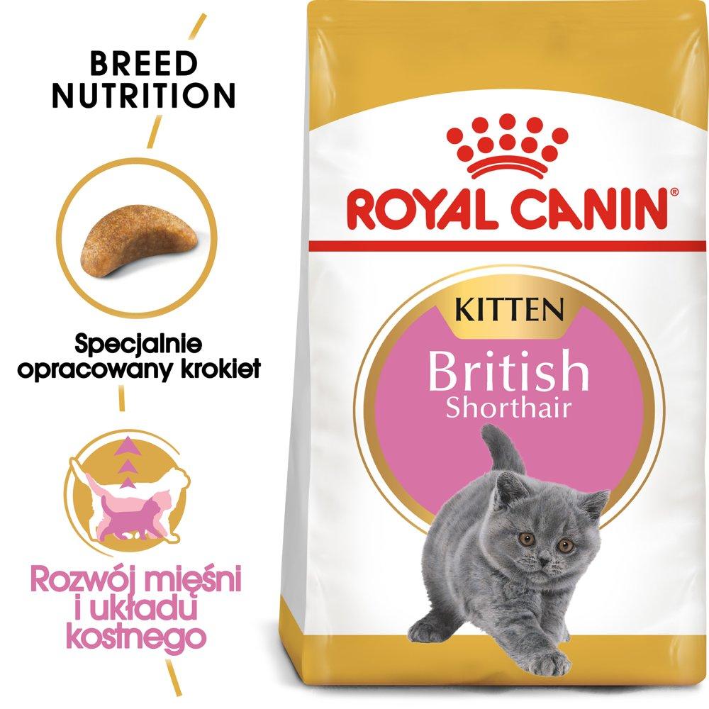 royal canin kitten british shorthair 10kg torba zakupowa gratis sklep internetowy zooart. Black Bedroom Furniture Sets. Home Design Ideas